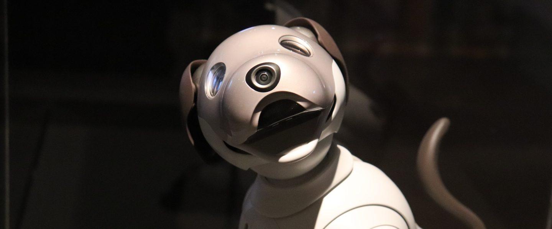 Chien robot: le parfait cadeau pour vos enfants